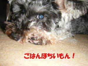 2009_022720060310kara0008