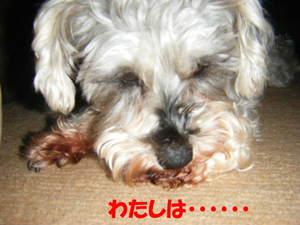 2009_022720060310kara0011