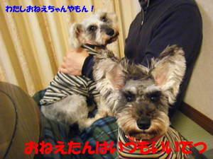 2009_030720060310kara0015