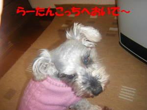 2009_031320060310kara0026