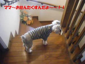 2009_031520060310kara0032