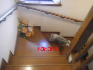 2009_031520060310kara0033