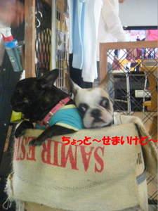 2009_041920060310kara0086