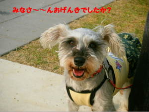 2009_06080026