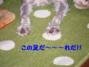 2009_06260013