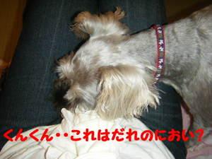 2009_07010005