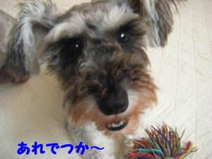 2009_07200015