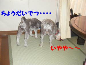 2009_07200030