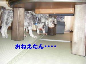 2009_07200031