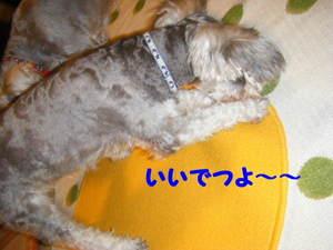 2009_07290020