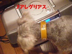 2009_09100015