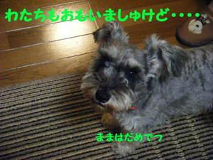 2009_09240006