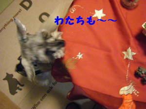 2009_12030040